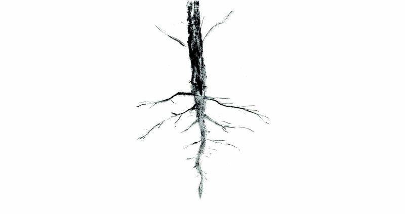 Y nuestros rostros raíz