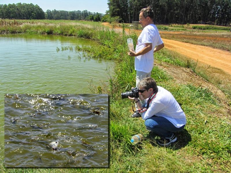 2 - ensinar a pescar