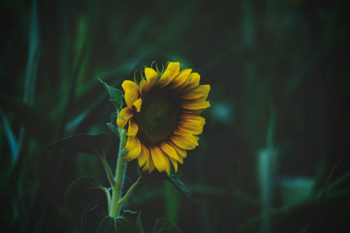 Hasta la muerte riega las flores