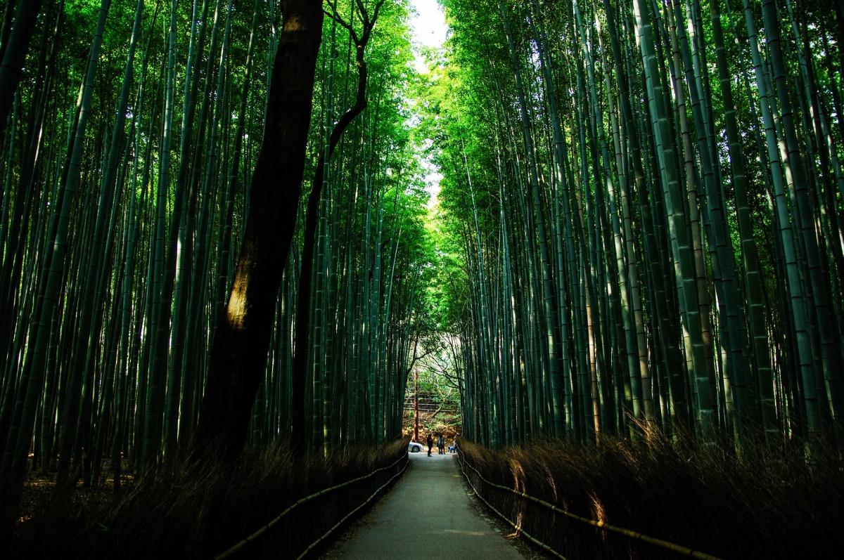 Pasos silenciosos entre bosques de haiku