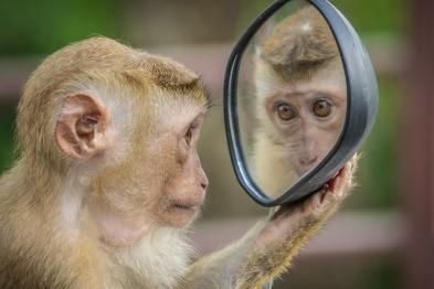 monkey-3512996_960_720