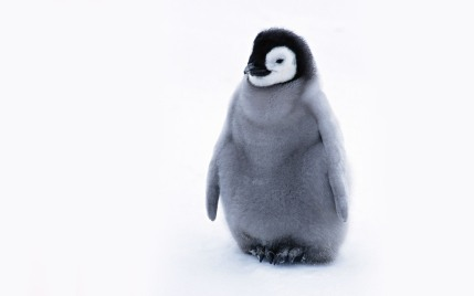 cute-penguin-penguins-24143954-1440-900